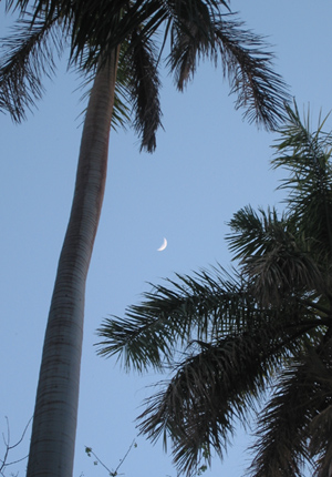 Aswan moon and palms