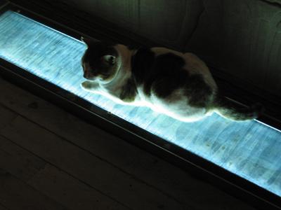 Cat at Philae